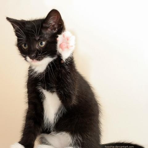可愛い猫画像ブログ(1304)