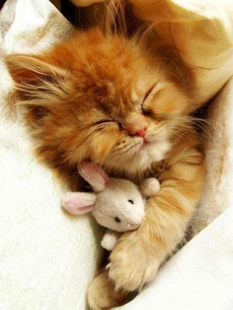 可愛い猫画像ブログ(785)
