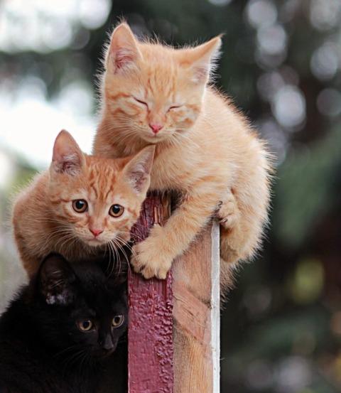 可愛い猫画像ブログ(1291)
