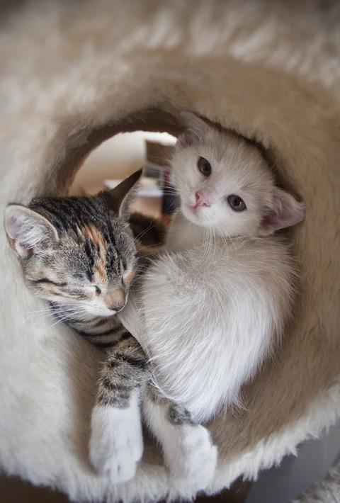 可愛い猫画像ブログ(1140)