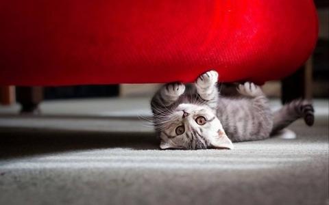 可愛い猫画像ブログ(1288)