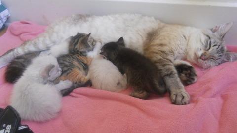 可愛い猫画像ブログ(778)