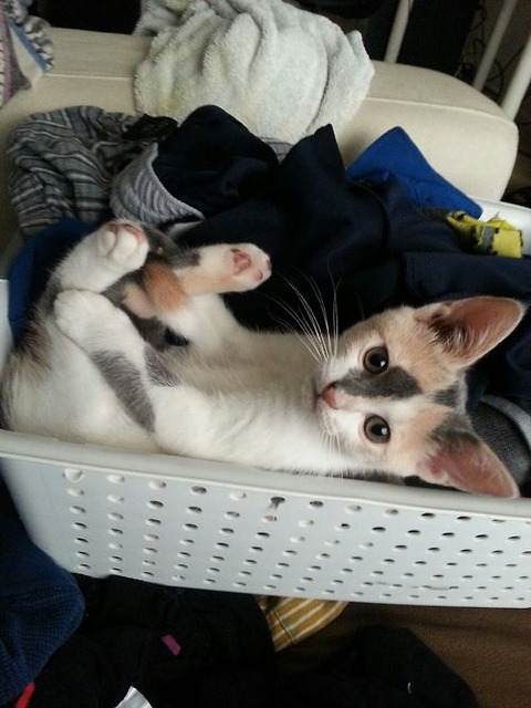 可愛い猫画像ブログ(1308)