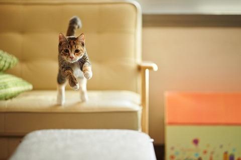 可愛い猫画像ブログ(1251)