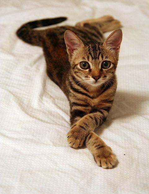 可愛い猫画像ブログ(790)