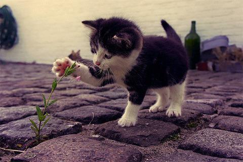 可愛い猫画像ブログ(1214)