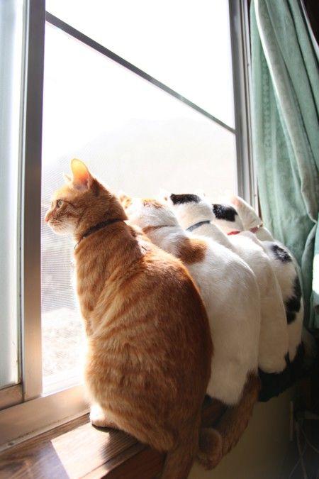 可愛い猫画像ブログ(1237)