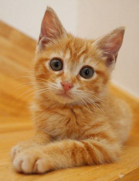可愛い猫画像ブログ(757)