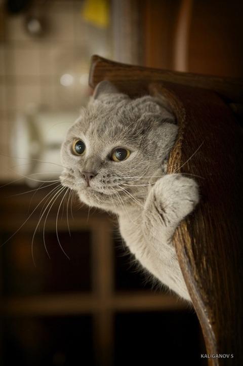 可愛い猫画像ブログ(1282)