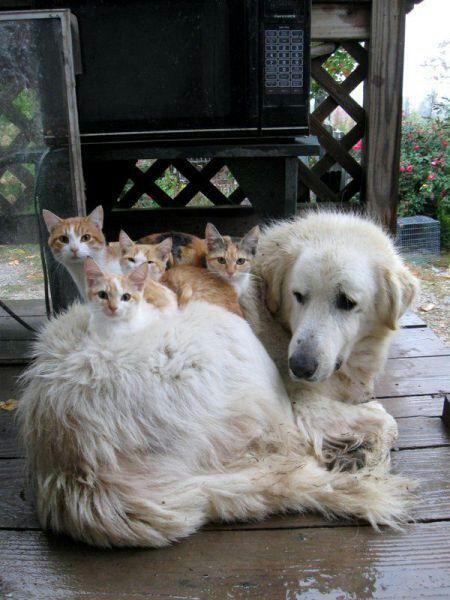 可愛い猫画像ブログ(1192)