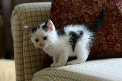 可愛い猫画像ブログ(784)