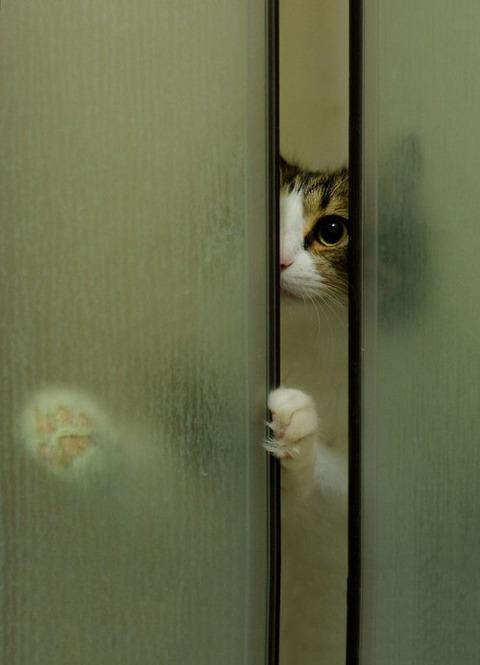 可愛い猫画像ブログ(1332)