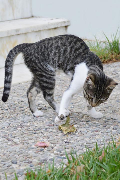 可愛い猫画像ブログ(1350)