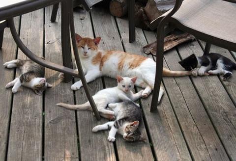 可愛い猫画像ブログ(1303)