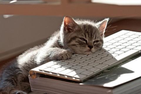 可愛い猫画像ブログ(1263)