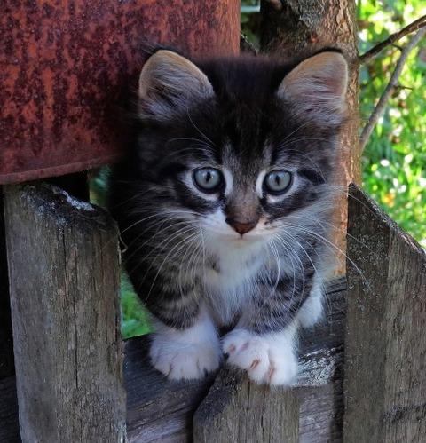可愛い猫画像ブログ(1298)