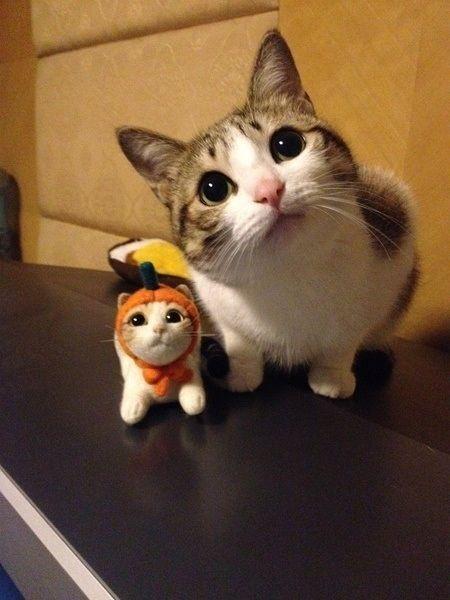 可愛い猫画像ブログ(1138)
