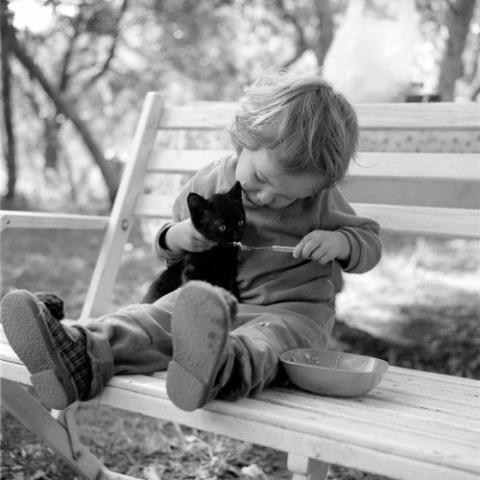 可愛い猫画像ブログ(1337)