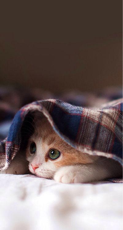 可愛い猫画像ブログ(1230)