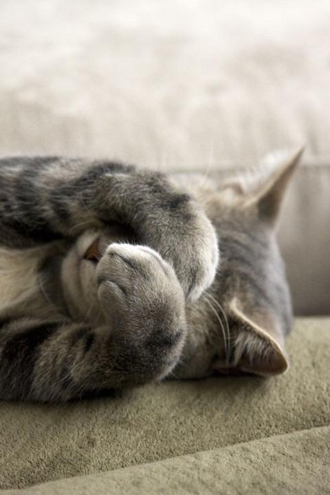 可愛い猫画像ブログ(1258)