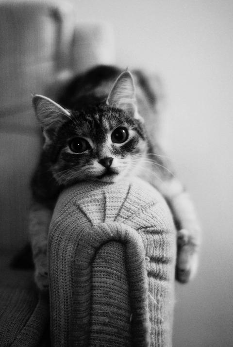 可愛い猫画像ブログ(839)