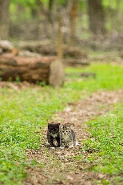 可愛い猫画像ブログ(1250)
