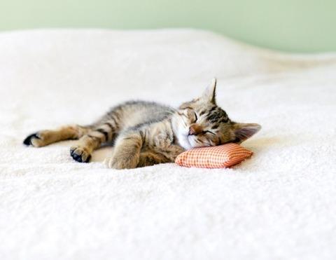 可愛い猫画像ブログ(1265)