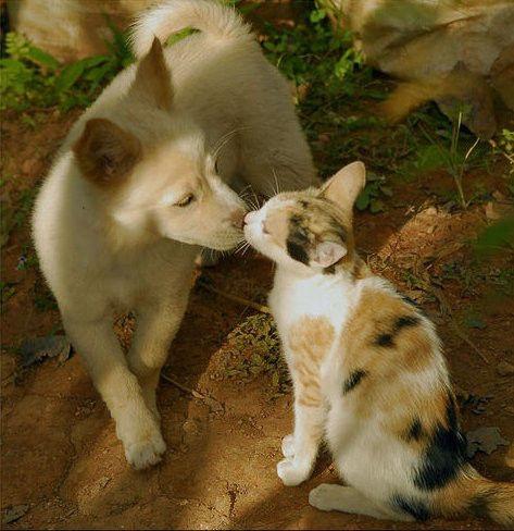 可愛い猫画像ブログ(1272)