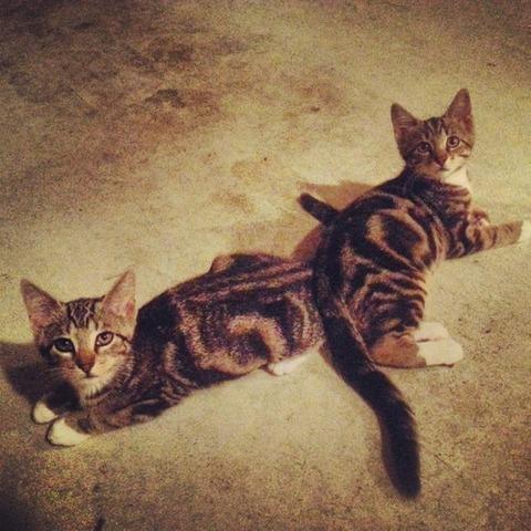 可愛い猫画像ブログ(1223)