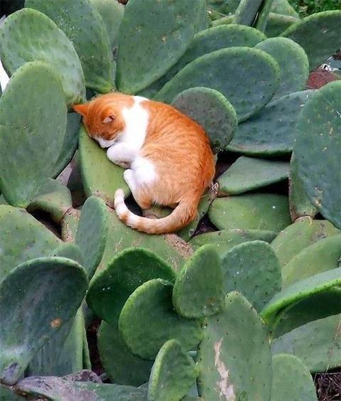 可愛い猫画像ブログ(1354)