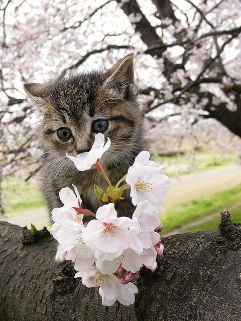 可愛い猫画像ブログ(1326)