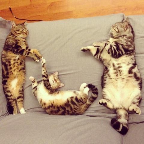 可愛い猫画像ブログ(1297)