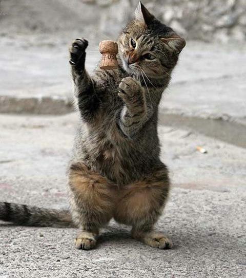 可愛い猫画像ブログ(910)