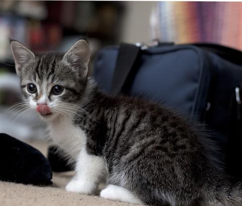 可愛い猫画像ブログ(758)
