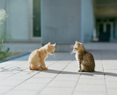 可愛い猫画像ブログ(1246)