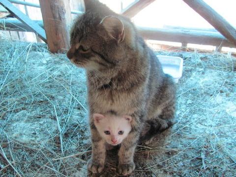 可愛い猫画像ブログ(1084)