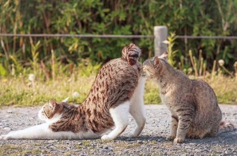 可愛い猫画像ブログ(1342)