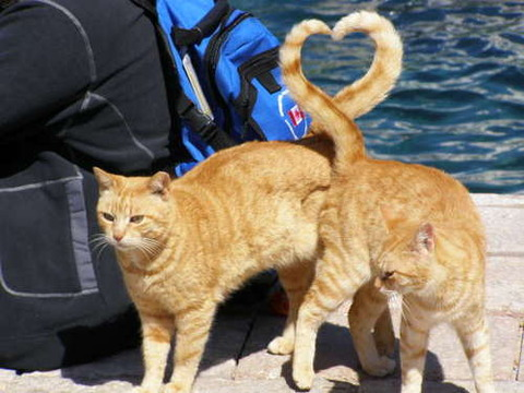 可愛い猫画像ブログ(773)