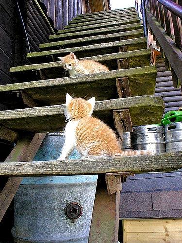 可愛い猫画像ブログ(779)