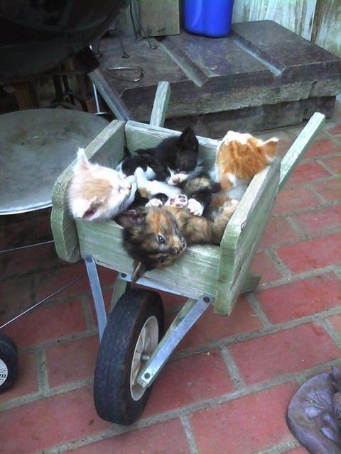 可愛い猫画像ブログ(794)