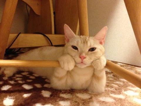 可愛い猫画像ブログ(1241)