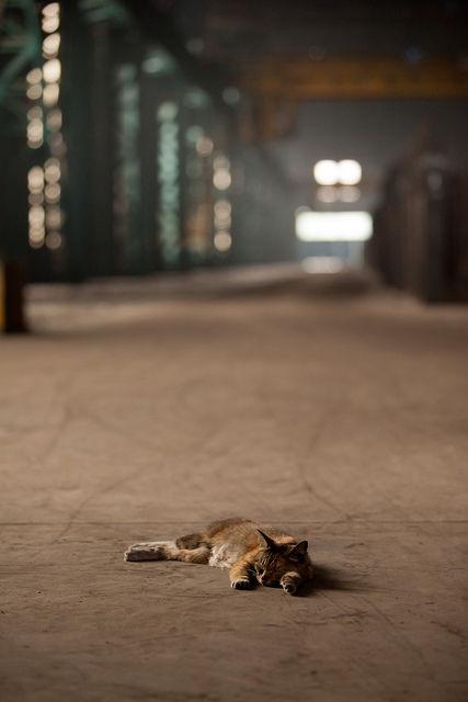 可愛い猫画像ブログ(1302)