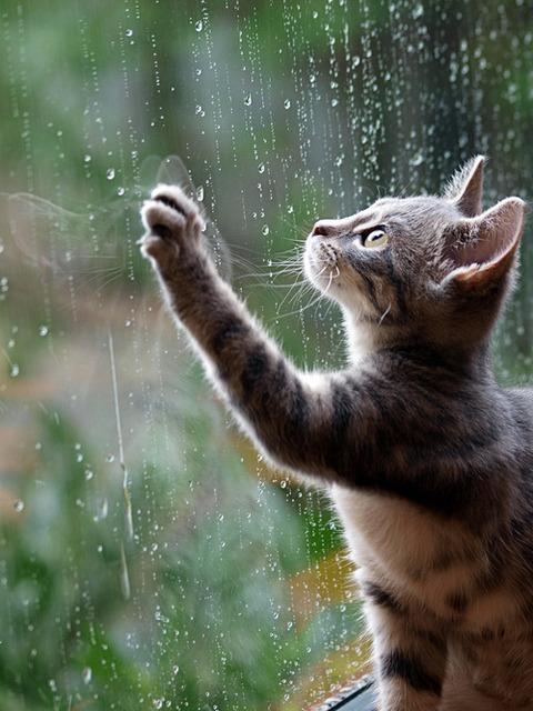 可愛い猫画像ブログ(1105)
