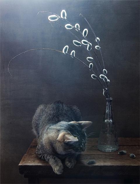 可愛い猫画像ブログ(1146)