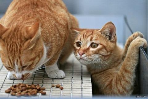 可愛い猫画像ブログ(1131)