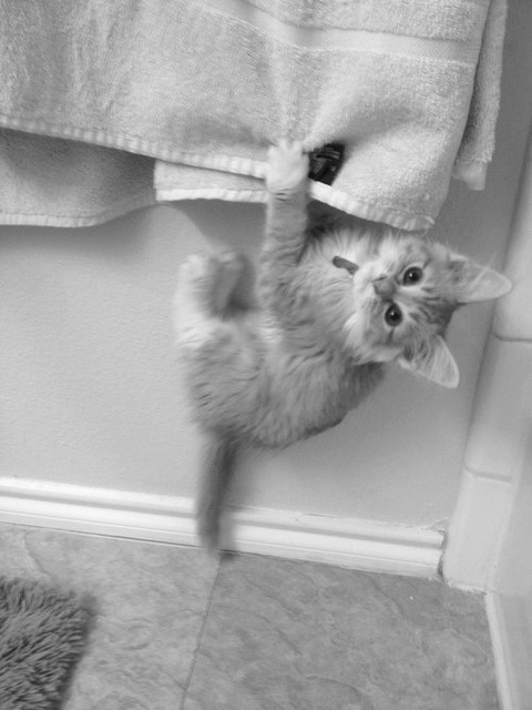 可愛い猫画像ブログ(1315)