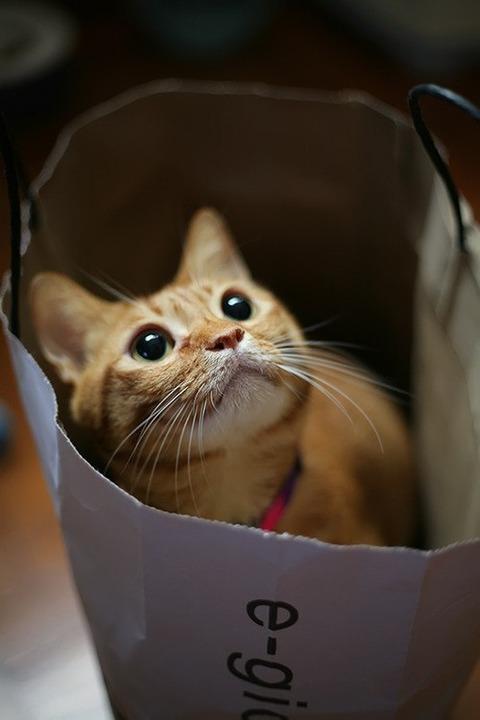 可愛い猫画像ブログ(1111)