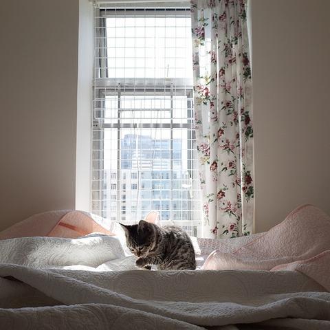 可愛い猫画像ブログ(1174)