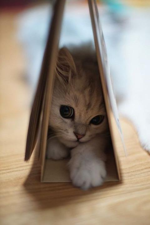 可愛い猫画像ブログ(1182)