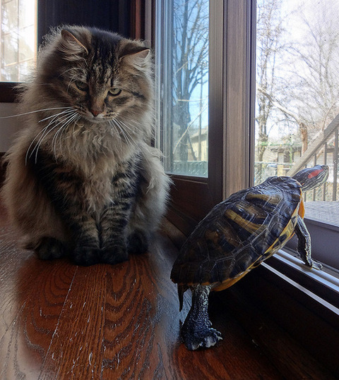 可愛い猫画像ブログ(1132)